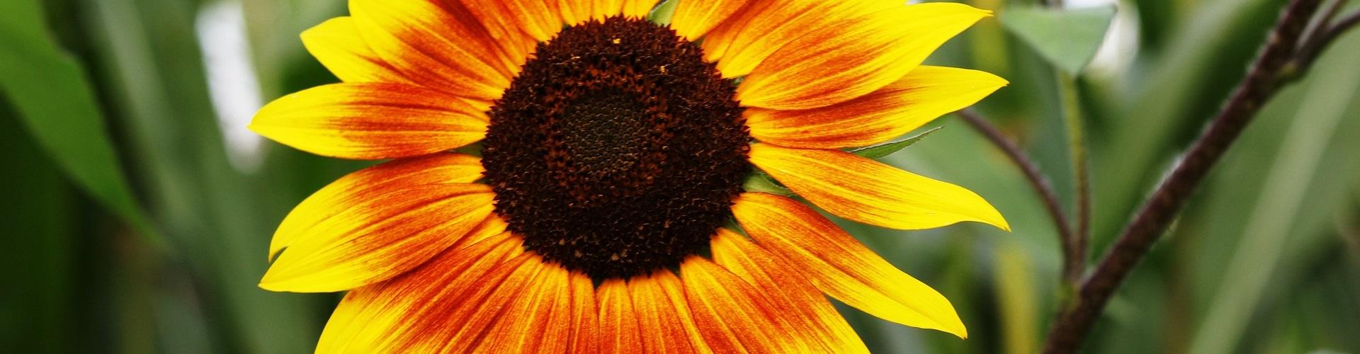 flower-116792_19201